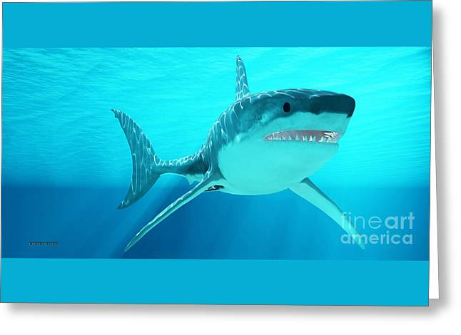 Great White Shark With Sunrays Greeting Card by Corey Ford