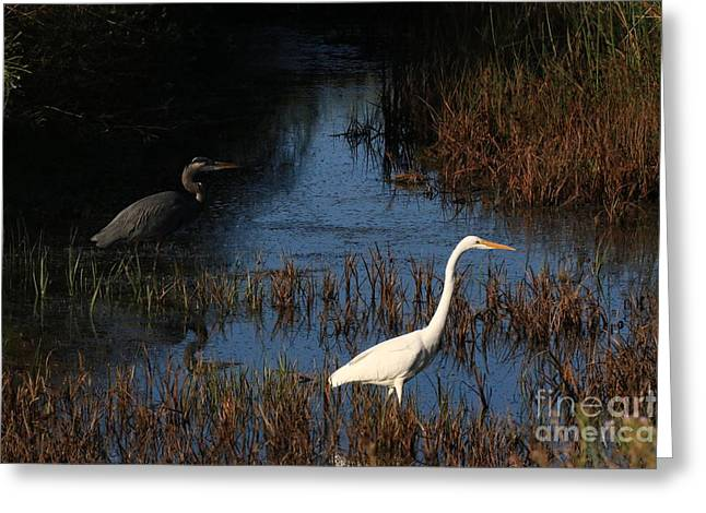 Hunting Bird Greeting Cards - Greats Together Greeting Card by Craig Corwin