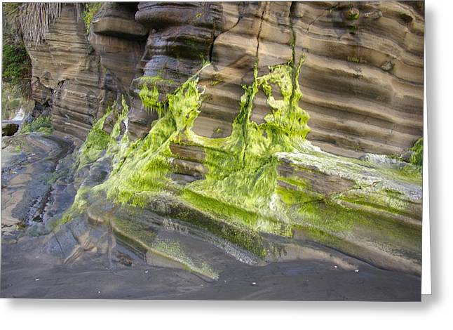 Alga Greeting Cards - Green Algae Strikes Greeting Card by James Cannon