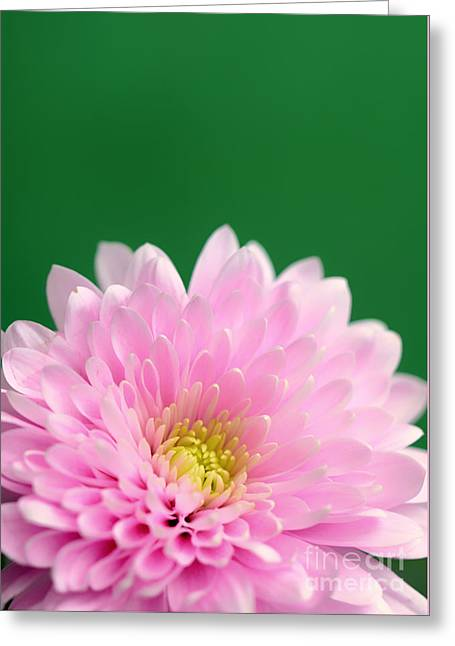 Green And Pink Greeting Card by SK Pfphotography