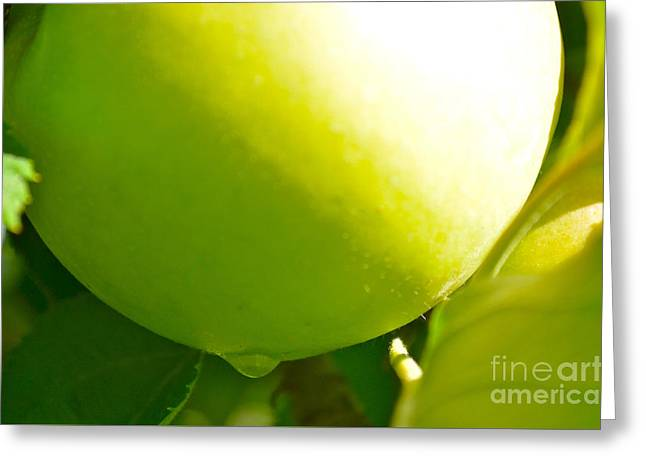 Fruit Tree Photographs Greeting Cards - Green Apple Greeting Card by Jason Freedman