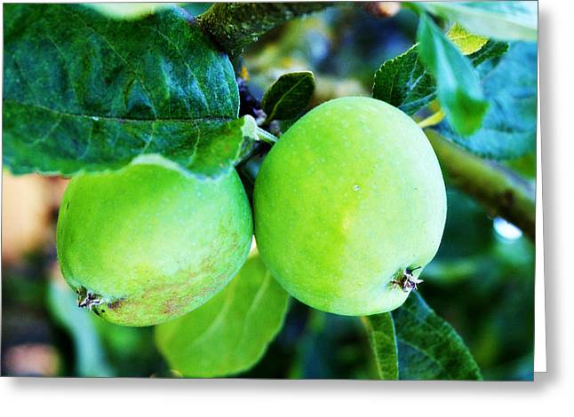 Fruit Tree Art Greeting Cards - Green Apples Greeting Card by Cathie Tyler