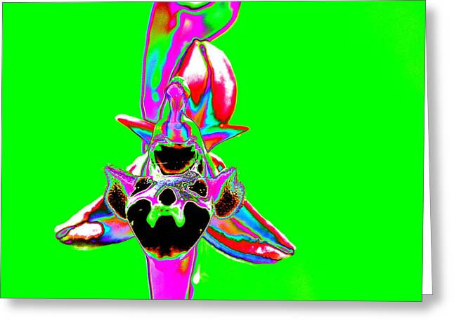 Wow Greeting Cards - Green Bee Orchid Greeting Card by Richard Patmore