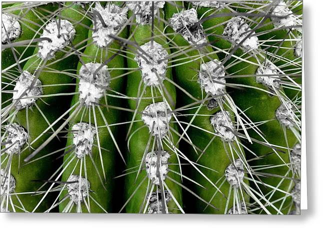 Green Cactus Greeting Card by Frank Tschakert