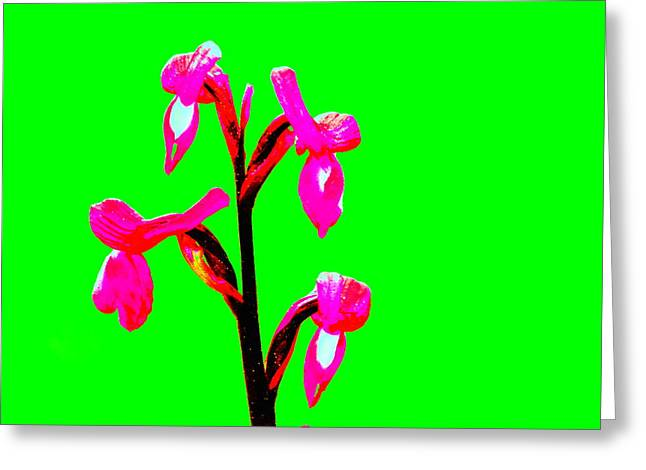 Green Champagne Orchid Greeting Card by Richard Patmore