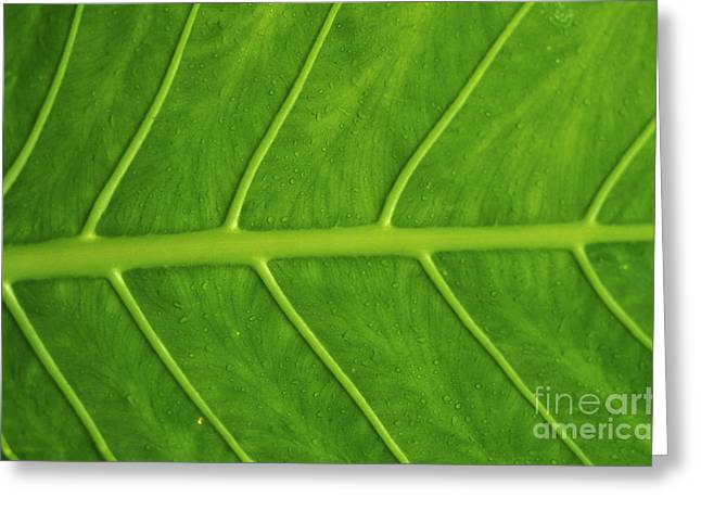 Moist Greeting Cards - Green Elephant Ear Greeting Card by Dana Edmunds - Printscapes