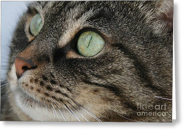 Cat Face Greeting Cards - Green Eyes Greeting Card by Debra Straub