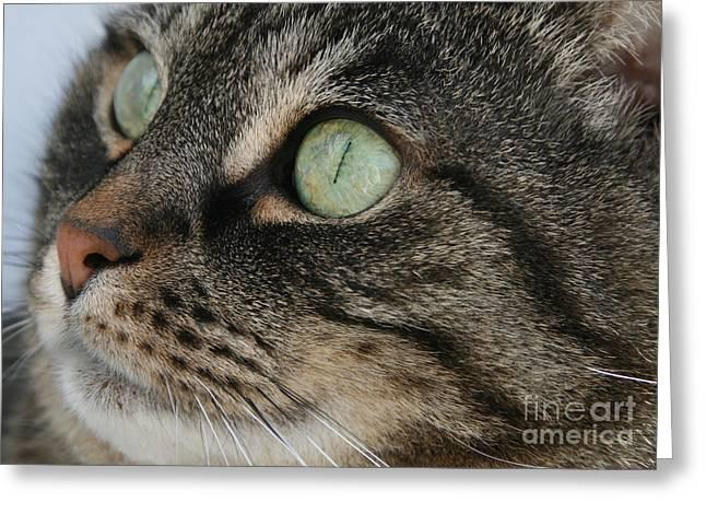 Green Eyes Greeting Card by Debra Straub