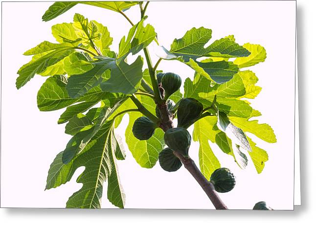 Ripe Pyrography Greeting Cards - Green figs Greeting Card by Andrea Casali