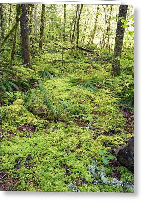 Green Foliage On The Forest Floor Greeting Card by Craig Tuttle