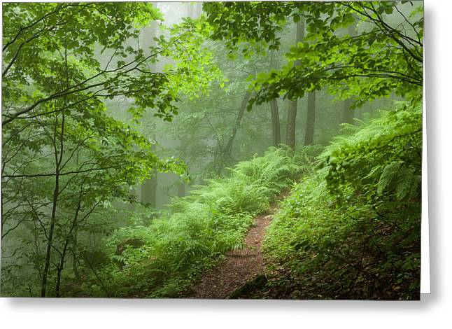 Green Forest Greeting Card by Evgeni Dinev