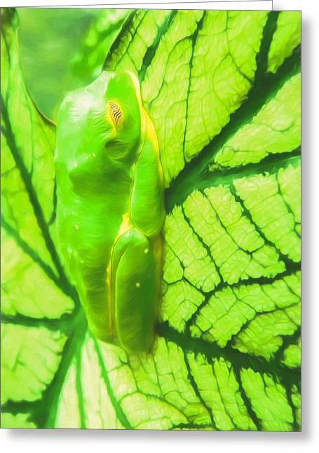 Tropical Rainforests Mixed Media Greeting Cards - Green Frog Art By Priya Ghose Greeting Card by Priya Ghose