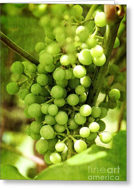 Fruit Tree Art Greeting Cards - Green Grapes on Vine Greeting Card by Ella Kaye Dickey