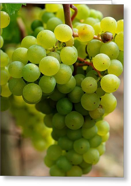 Grape Vineyard Greeting Cards - Green Grapes Greeting Card by Sabine Edrissi