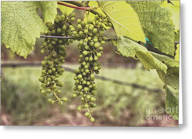 Sunlight On Flowers Greeting Cards - Green Grapes Spring Crop on the Vine Greeting Card by Ella Kaye Dickey