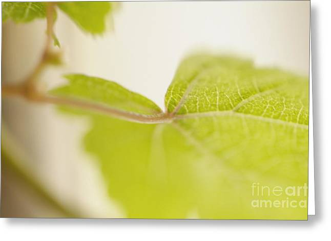 Grapevine Greeting Cards - Green grapevine leaf Greeting Card by Sami Sarkis