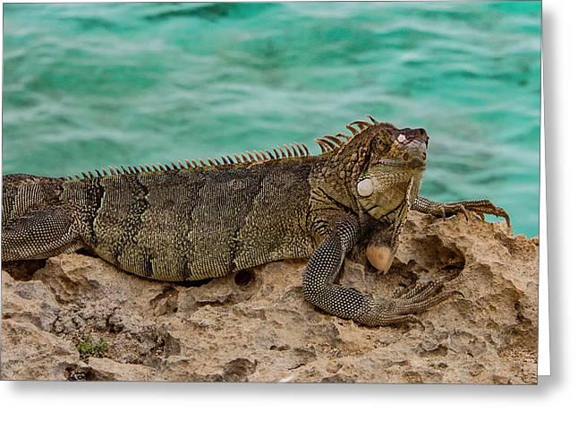 Green Iguana Basking In Sun Greeting Card by Jean Noren