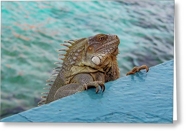 Green Iguana Looking Over Wall Greeting Card by Jean Noren