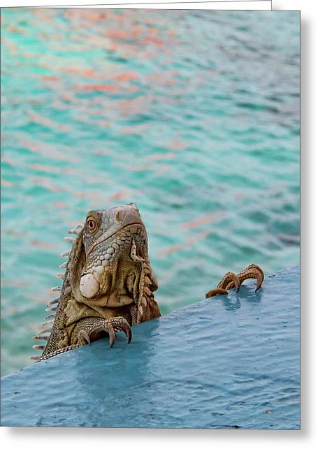 Green Iguana Peering Over Wall Greeting Card by Jean Noren