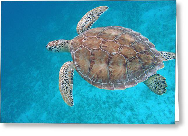 Snorkel Greeting Cards - Green In Blue Greeting Card by Kimberly Mohlenhoff