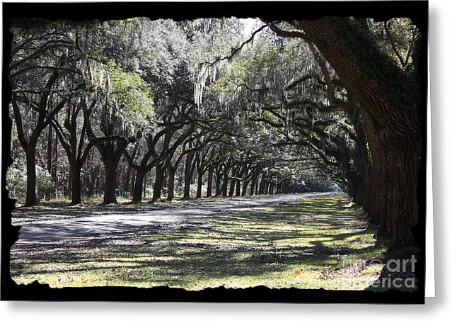 Moss Green Greeting Cards - Green Lane with Live Oaks - Black Framing Greeting Card by Carol Groenen
