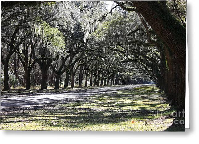 Savannah Nature Photography Greeting Cards - Green Lane with Live Oaks Greeting Card by Carol Groenen