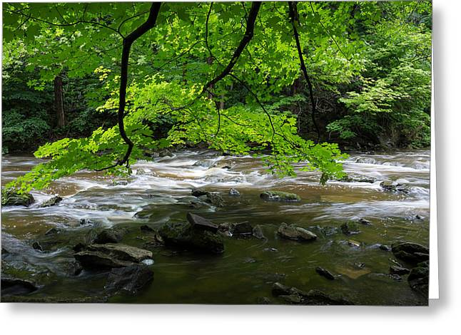 Akron Falls Greeting Cards - Green Leaves Over River Greeting Card by Greg McGill