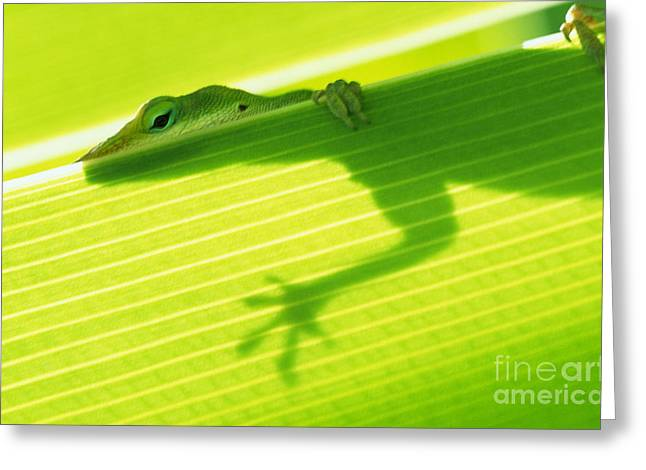 Ledge Photographs Greeting Cards - Green Lizard Greeting Card by Bill Brennan - Printscapes