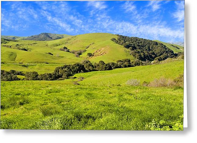 Green Meadow Santa Ynez Valley Ca Greeting Card by Eyal Nahmias