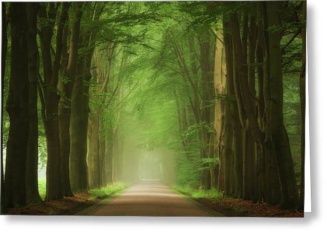Green Mist Greeting Card by Martin Podt