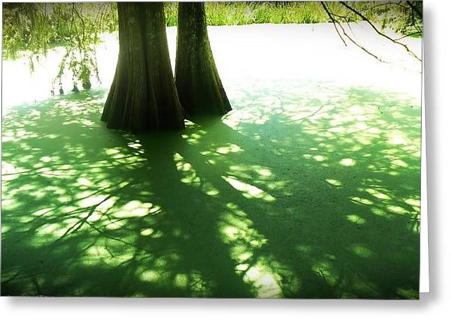 Alga Greeting Cards - Green Myrtles Swamp Greeting Card by Melissa Bertaut