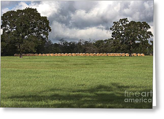 Field. Cloud Greeting Cards - Green Pastures Greeting Card by Ella Kaye Dickey