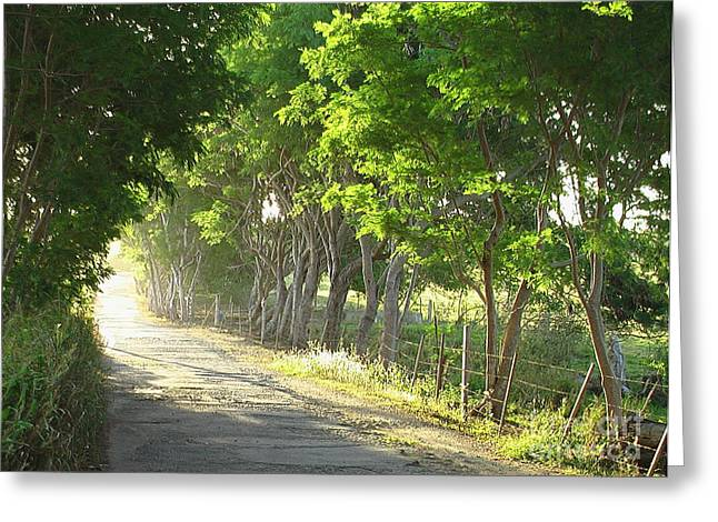 Green Path Greeting Card by Barbara Marcus