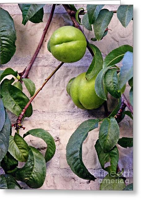 Green Peaches Greeting Card by Sarah Loft