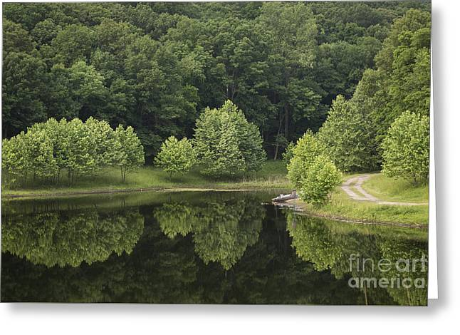 Andrea Silies Greeting Cards - Green Reflections Greeting Card by Andrea Silies