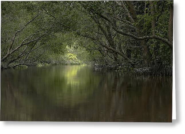 Reflex Greeting Cards - Green River Greeting Card by Roberto Pazzi