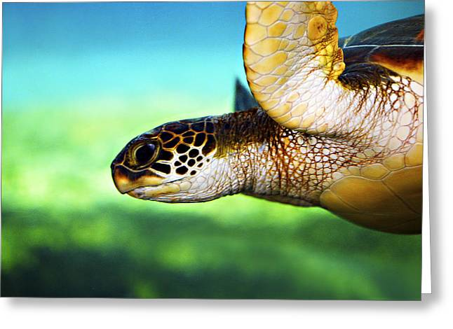 Swimming Greeting Cards - Green Sea Turtle Greeting Card by Marilyn Hunt