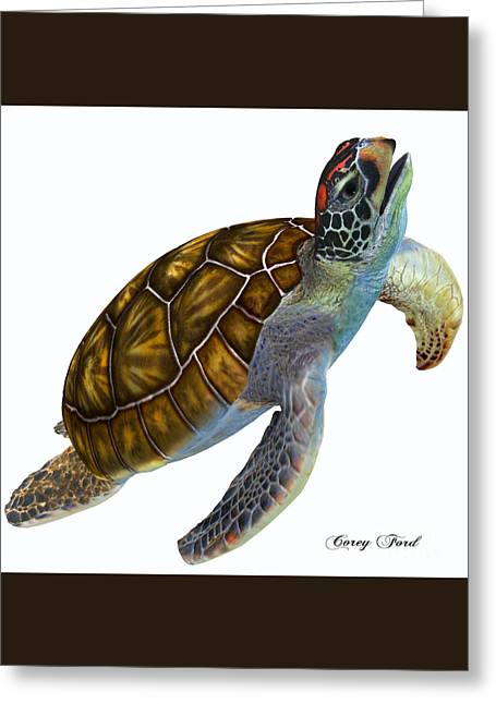 Sea Life Digital Greeting Cards - Green Sea Turtle Profile Greeting Card by Corey Ford