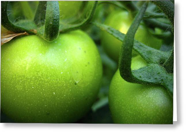 Dslr Greeting Cards - Green Tomatoes No.2 Greeting Card by Kamil Swiatek