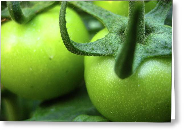 No 3 Greeting Cards - Green Tomatoes No.3 Greeting Card by Kamil Swiatek