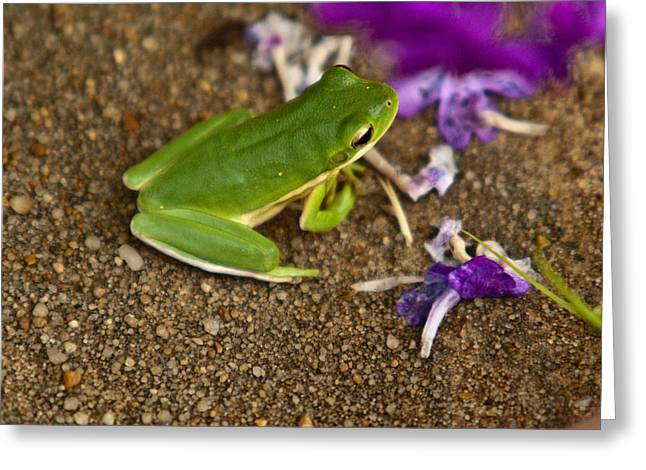 Tennessee Greeting Cards - Green Tree Frog and Flowers Greeting Card by Douglas Barnett