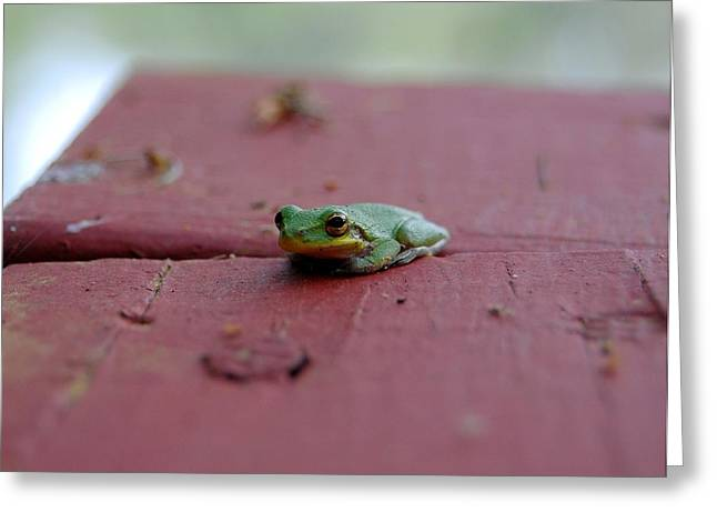 Tree Frog Greeting Cards - Green Tree Frog Greeting Card by Robert Meanor
