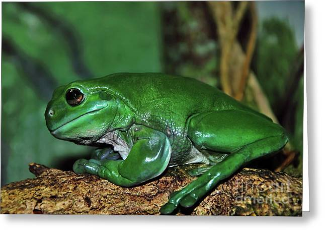 Green Tree Frog With A Smile Greeting Card by Kaye Menner