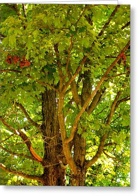 Background Greeting Cards - Green tree in park 10 Greeting Card by Lanjee Chee