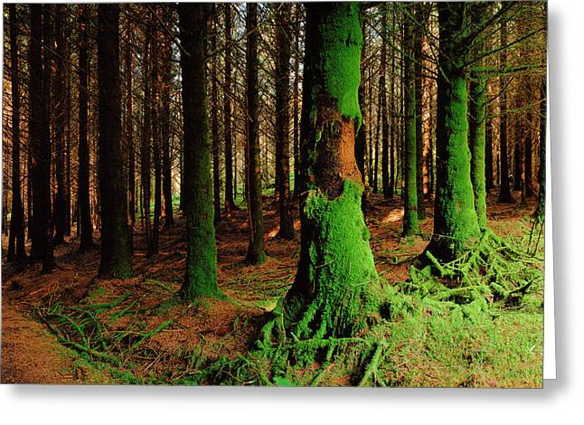 Green Trees, Mull Greeting Card by Jan W Faul