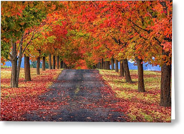 Greenbluff Autumn Greeting Card by Mark Kiver