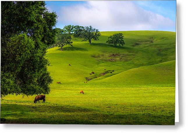 Fed Greeting Cards - Greener Pastures Greeting Card by Mark Cote