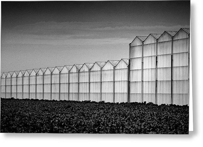 Greenhouse Greeting Card by Dave Bowman