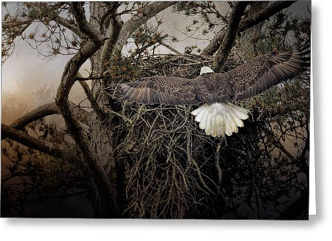 Eagles In Flight Greeting Cards - Greeting Mama Greeting Card by Jai Johnson