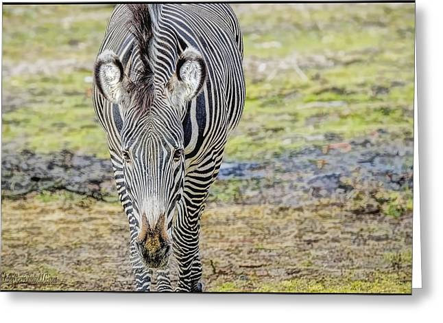 Prison Stripes Greeting Cards - Grevys zebra Greeting Card by LeeAnn McLaneGoetz McLaneGoetzStudioLLCcom